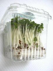 ブロッコリーの芽 1パック