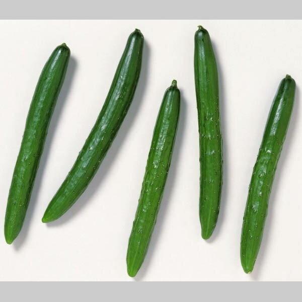 国産 きゅうり キュウリ 胡瓜 1箱 5kg