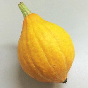 生のままスライスしてサラダに生食できる黄色いかぼちゃ 国産 コリンキー 1玉