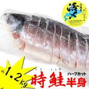 今が旬新物入荷北海道産時鮭(トキシラズ)ハーフカット約1.2kg