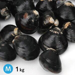 宍道湖産砂抜き冷凍大和しじみ(シジミ)Mサイズ1kgを激得価格で御提供します。