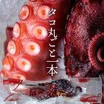 お刺身たこ足ボイル[800g〜1kg]北海道産斜里町知床