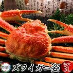 ずわいがに姿超特大1尾(800g〜1kg)ボイルかにずわい蟹ズワイガニ姿