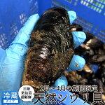 ムール貝活貝特大3Lシウリ貝1kg[3-6個]三陸宮城県産気仙沼天然旬季節の貝料理屋料亭料理食材