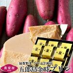 さつまいもプリン五郎島金時プリン12個入石川県産加賀野菜さつま芋スイーツ焼きいもぷりん