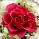 【即納】 プリザーブドフラワー 結婚祝い 誕生日プレゼント Serena セレナ −18 カシス−