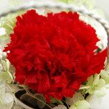 【即納】 プリザーブドフラワー Serena セレナ −カーネーション レッド 赤 −敬老の日