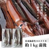 日本海産 冷凍するめイカ 1kg お刺身OK!小ぶりで使いやすい プロトン凍結 水産物応援商品