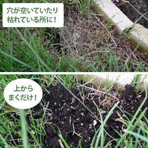 好評の「まくだけで甦る」に芝生にまける専用土壌改良材が新登場!送料無料でお得です!【送料...