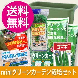 緑のカーテンの栽培セットに扱いやすいミニサイズも新登場!【送料無料】緑のカーテン作ってみ...