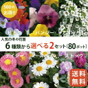 人気の秋冬の花苗6品種から選べる2セット(80ポット)(3寸