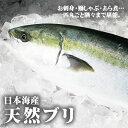 【日本海産】天然ブリ[生] 1匹(3kg前後)