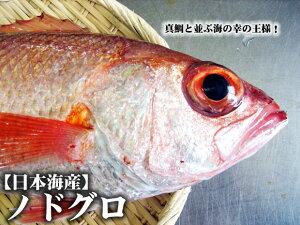 【塩焼き・煮つけに♪加熱用】【スピード出荷】日本海産ノドグロ(赤むつ)[生] 500g詰め込み(9尾前後入り)【塩焼き・煮つけ♪】