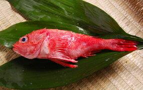 とろとろ♪白身魚の高級魚!北海道産 釣りのきちじ(きんき)