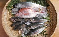 瀬戸内海産 冬の魚介類セット(瀬戸内の天然活き鯛・めばる3尾・地あじ3尾・地さばもしくは代替え…