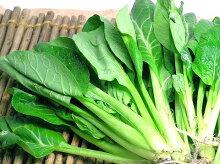 自然農法小松菜1束