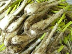★自然農法50年(有機JAS) 鹿児島産(又は宮崎産)★発送日限定のため、他の野菜・果物とは同...
