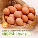 期間限定!若鶏が産んだ新鮮「初たまご60個入り」全国送料無料 赤玉 太陽卵 初卵 ういらん 妊娠 出産 縁起物 長寿祈願 初産み卵 贈り物 ギフト