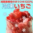 自宅でいちごアイスが作れる『冷凍いちご500g』【減農薬】【まりひめ】【有機栽培】【イチゴ】【手作り】【スムージー】【氷】【冷凍】【かき氷】【P20Aug16】【敬老の日】