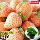 【てしまの苗】 イチゴ苗 桃薫 9cmポット 【人気】