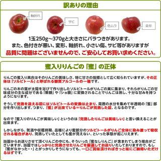 予約注文【訳あり】福島県産りんごサンふじ5kg11月中旬ごろから出荷予定