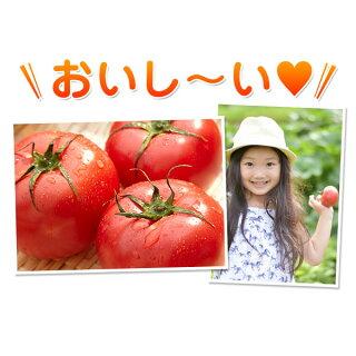 福島県産大玉トマト4kg酸味と甘みのバランスが絶妙