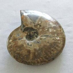 アンモナイト化石 原石 虹入り Ammonite アンモン貝 fossil フォッシル 菊石 アンモライト 置物 インテリア 台座付属 181-1666