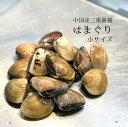 畜養はまぐり 小サイズ 500g(1個30gサイズ)15-17個 ハマグリ 蛤【畜養ハマグリ500g(30g)】冷蔵