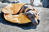 【アウトバック ドリーマー】機能性抜群の寝袋 サイズ(直径90cm) 犬用 大型犬 【送料無料! Hurtta Outback Dreamer フルッタ ☆】寝袋L