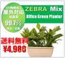 人工観葉植物 オフィスプランター装飾 パテーション触媒加工送料込み価格4980円オフィスグリーンフェイクグリーンプランター ¥4980
