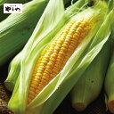 【送料無料】やまや 宮崎県西都市産 ゴールドラッシュ 約4.5kg(11〜15本)(産地直送 とうも ...