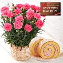 苺ロールケーキとピンクカーネーション5号鉢【2011母の日】苺ロールケーキとピンクカーネーショ...