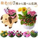 敬老の日 花 ギフト プレゼント 7種から選べる お花 リン...