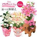母の日 ギフト プレゼント 花 2020 カーネーション 百合 マダガスカルジャスミン 6種類から選べるお花 母の日プレゼント 鉢植え