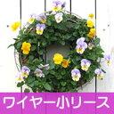 【ワイヤー小セット】花苗で作るリース ハンギング メッシュタイプ[FMP01-30G]