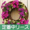 【リース中サイズセット】宿根草/寄せ植え向きハンギング/ドーナツリース/リース型プランターセ...