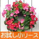 【お試し小リースセット】花苗で作るリース型 ハンギングバスケット