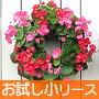 感動のお花で作るリース(小)