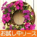 楽しさ一年じゅう  季節ごとの花で植替えたら、幸せが続きます。カゴは繰り返し使えます。 モニターセットなら植替え用の土や水苔が最初から付いてます。 【初回限定/送料無料】寄せ植え/宿根草/10.5cm苗向きリース型/プランターのセット【人気商品】 (お試し)花苗で作るハンギングリース(中サイズ)