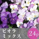(予約)★★ビオラ 花苗 24ポットミックス