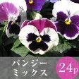 ★★パンジー 花苗 24ポットミックス
