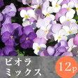 ◎◎ビオラ 花苗 12ポットミックス