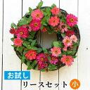 [お試し]小 リース セット 花苗で作る ハンギングリース 壁掛け 鉢