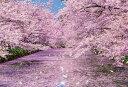【1000P】弘前公園の桜