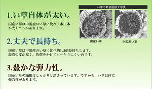 純国産い草花ござカーペット『ブロック』グリーン江戸間8畳(約348×352cm)