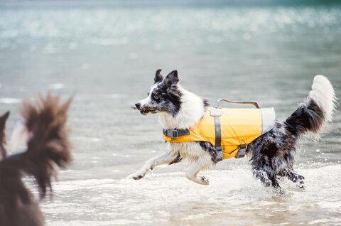 フィンランドのドッグブランド【Hurtta】【フルッタ】ライフジャケット【Life Savior】 小中型犬用