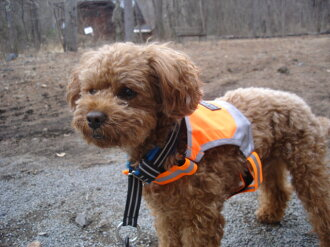 Finland (micro best) dog brand Micro Vest