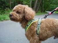 フィンランドのドッグメーカー【Hurtta】・Y型クッションハーネス小・中型犬用