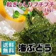 朝どり新鮮!海ぶどう(1kg)【送料無料】