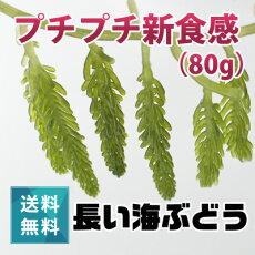 宮古島の海ブドウ(100g)